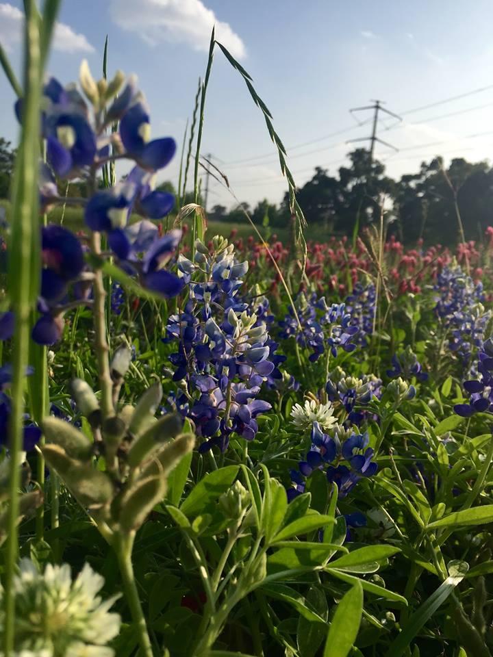 Wildflowers > Worries